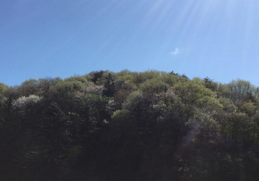 春から夏にかけて。朝の山
